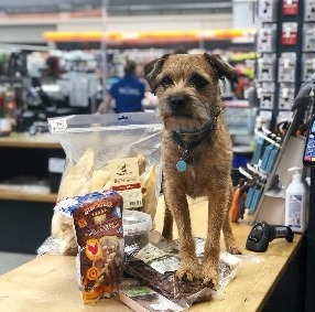Cons For Bringing Dogs in Stores