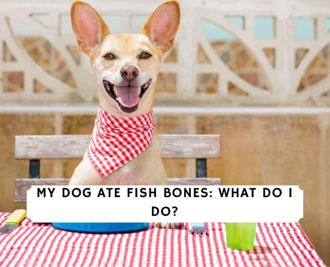 Dog Ate Fish Bones