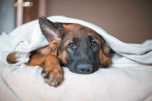 Conclusion For Dog Ate Melatonin