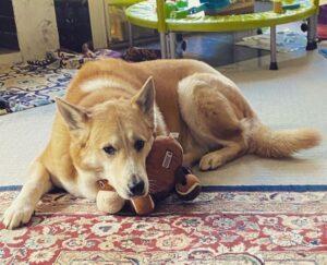 Dog With Brain Tumors
