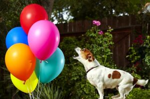 What To Do After Your Dog Ate a Balloon