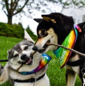 Dogs' Inner Scavenger Behavior