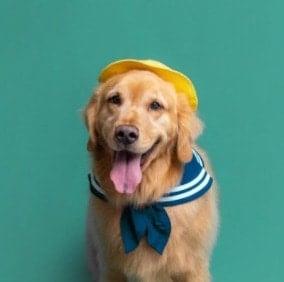 Emery-n-Denise's Golden Puppies