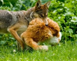 Factors that Affect The Fox's and Dog's Relationship