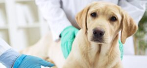 How Quickly Do Brain Tumors in Dogs Progress?