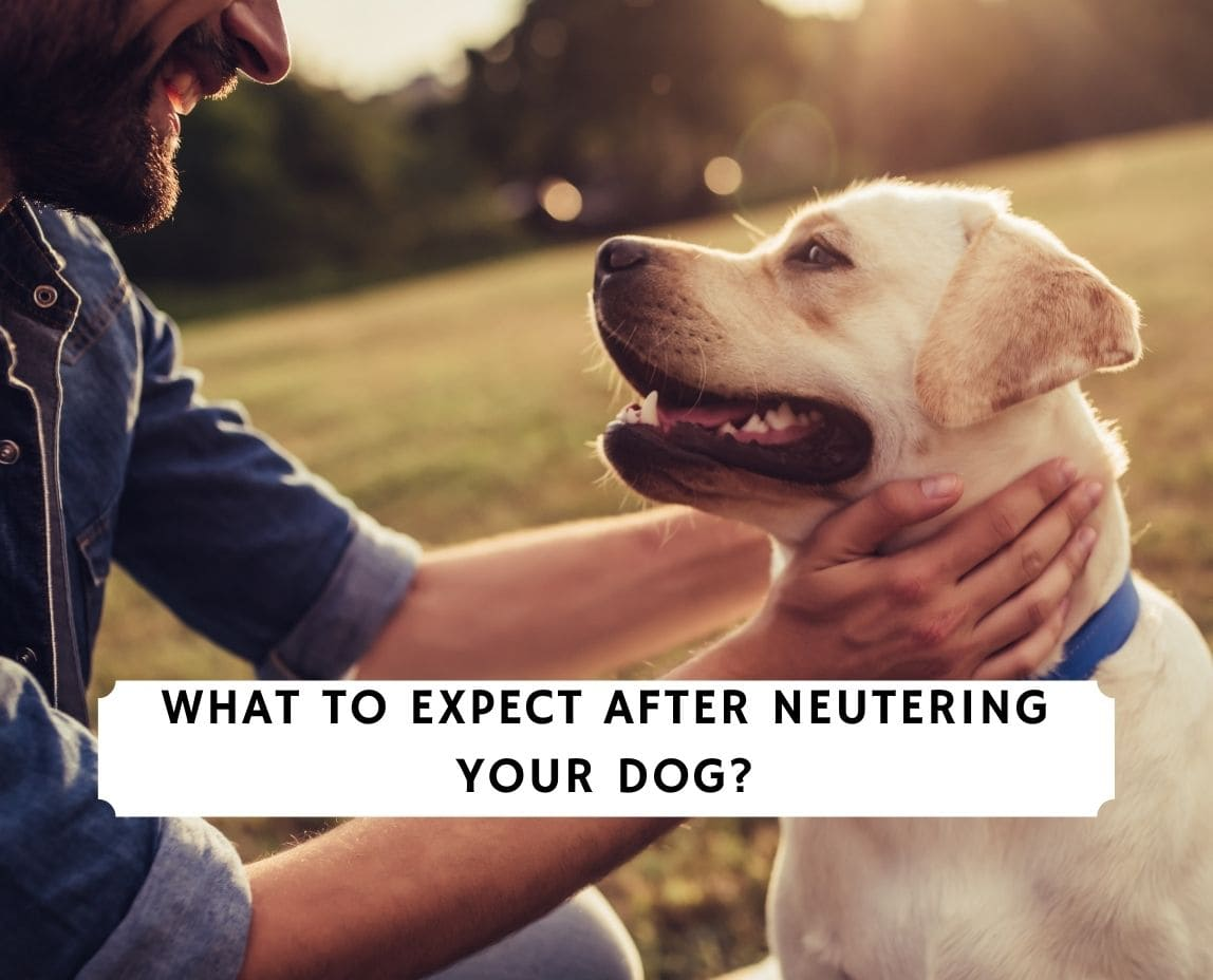Neutering Your Dog