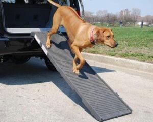 Pet STEP Original Folding Pet Ramp 3.60 (Fresh Water Ramp)