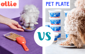 PetPlate Vs. Ollie Food Delivery Comparison