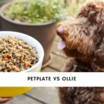 PetPlate vs Ollie