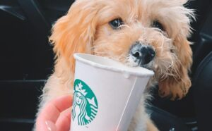 How Can You Get a Puppuccino?