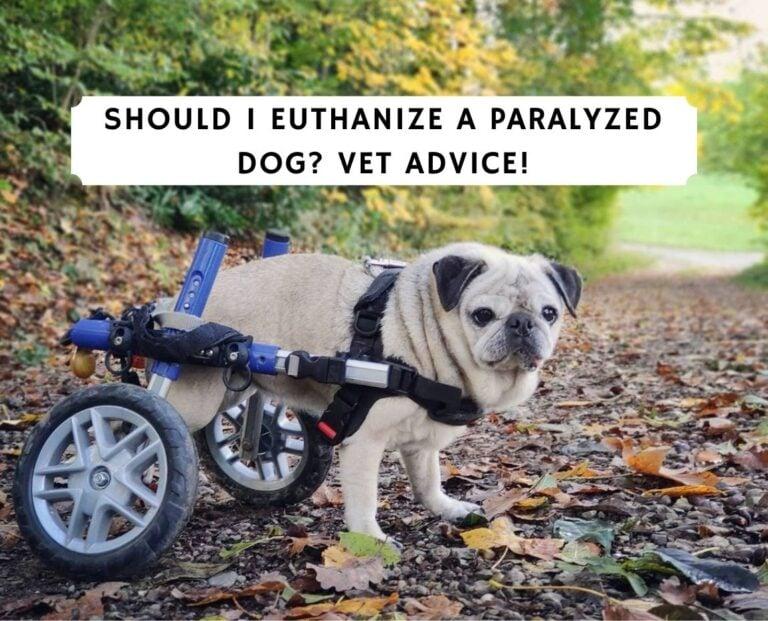 Should I Euthanize a Paralyzed Dog