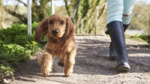 Signs Your Dog Needs a Potty Break