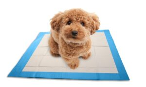 Supplies for Potty Training a Labradoodle Puppy