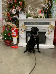 Tips For Bringing Your Dog to Lowes