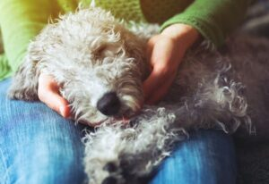 Tips to Get Your Dog to Sleep