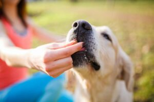 Training Your Puppy to Limit Their Barking