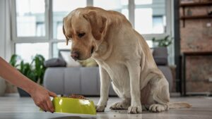 Ways to Entice Your Senior Dog to Eat