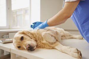 Ways to Reduce the Cost of Euthanizing Your Dog