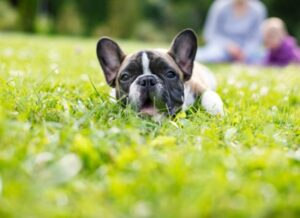 do dogs poop out worms after dewormer