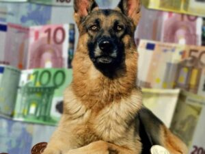What Influences the Cost of a German Shepherd