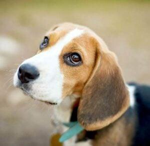 What To Do When Your Dog Eats Melatonin