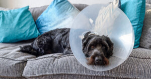 What To Expect After Neutering