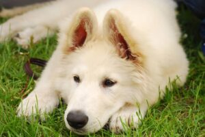 do puppies poop worms after deworming