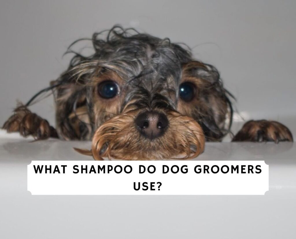 What shampoo do dog groomers use_
