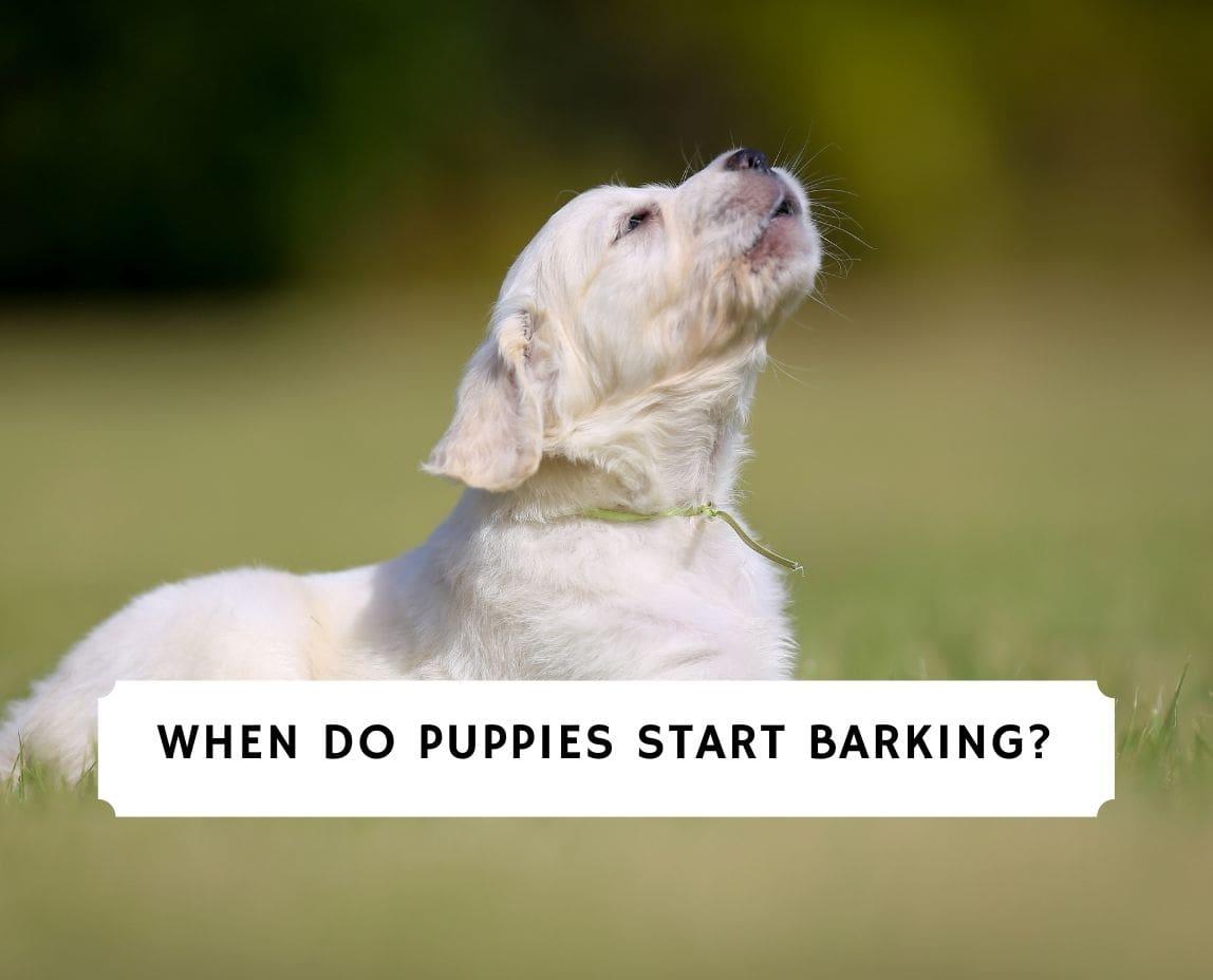 When Do Puppies Start Barking