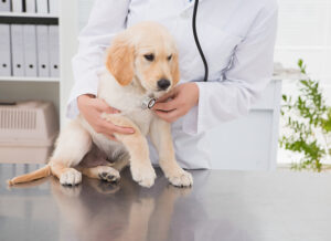 When Should Dogs Get Neutered?