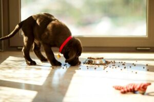 When Should You Switch Your Puppy To Three Meals A Day?