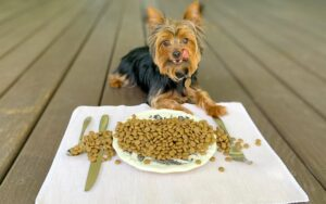 Conclusion For When Should You Switch Your Puppy To Two Meals A Day