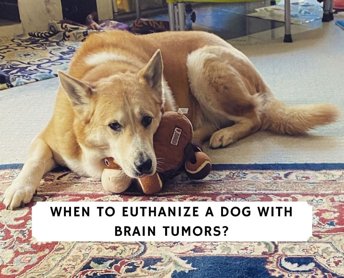 When to Euthanize a Dog With Brain Tumors