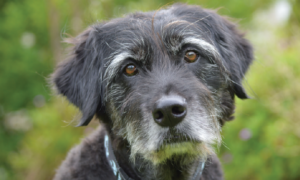 When to Euthanize Dog With Hemangiosarcoma