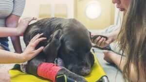 Where to Euthanize a Dog at Low Cost