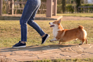 Why Do Dogs Follow Its Owners