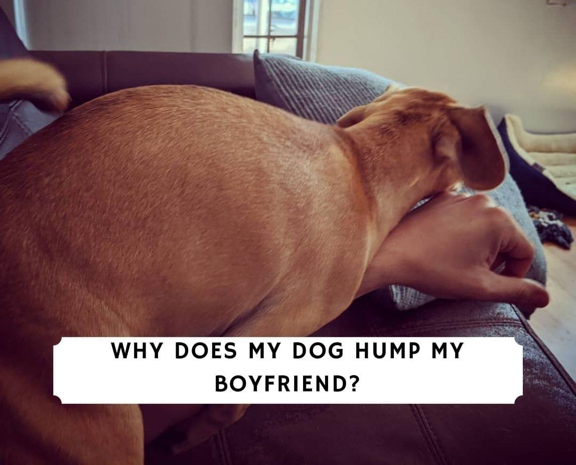 Why Does My Dog Hump My Boyfriend_