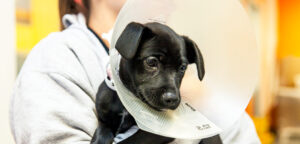 Why Neuter Your Dog