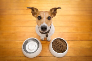 Why Should You Limit Your Puppy To Two Meals A Day?