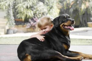 Can Rottweilers be family dogs?