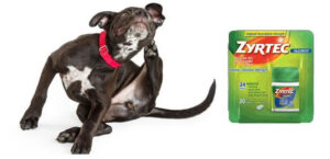 Conclusion For Zyrtec For Dogs