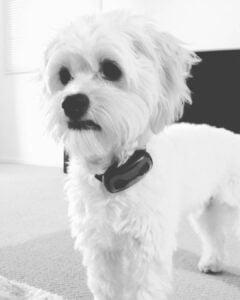 bark training collar for small dogs