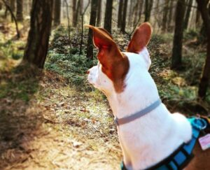 dog Flea and Tick Collars
