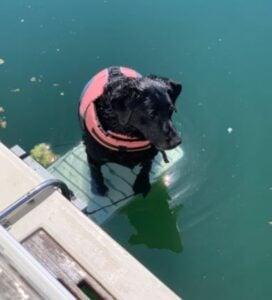 dog ramp for pontoon boat