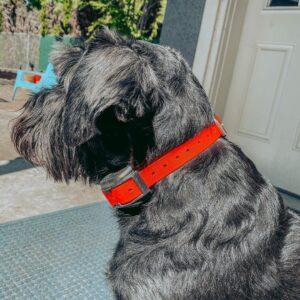extra large dog training collar