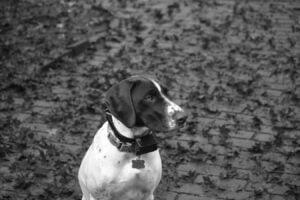 how to use a dog e collar