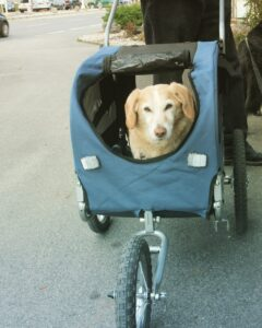 pet gear stroller for large dogs