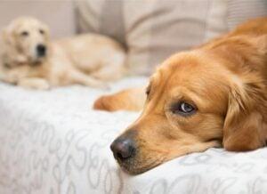 Is Melatonin Bad For Dogs?