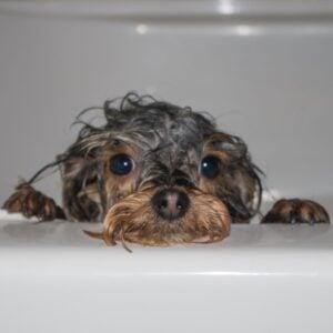 professional grade dog shampoo