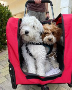 strollers for big dogs